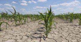 Sequía: se profundiza la crisis del campo bonaerense
