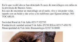 Murciélagos: Precaución y toma de conciencia