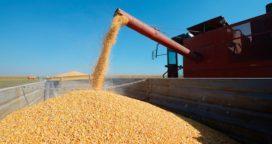 Exportaciones de maíz llegarían a las 29 mill de toneladas