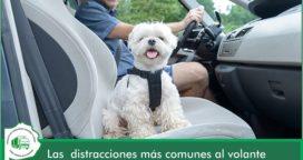 Las distracciones más comunes al volante y cómo evitarlas