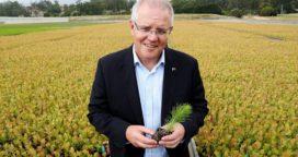 Australia,  Mil millones de árboles para luchar contra el cambio climático