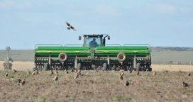Sequía: Reducen el área sojera