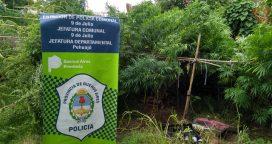 Un detenido por sembrar marihuana